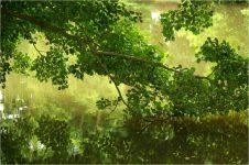 Forêt et étang - méditation