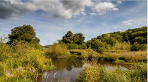 Zone humide pour la gestion des masses d'eau